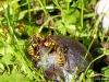 Auch Wespen erfreuen sich an den Pflaumen