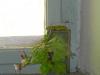 4blog-2015-06-06_17-44-54