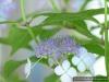 4blog-2015-06-07_11-12-40