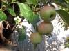 4blog-2012-09-14_18-01-15-jpg