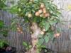 4blog-2012-10-02_18-23-18-jpg