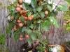 4blog-2012-10-28_15-57-36-jpg