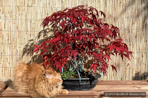 4blog-2011-10-30_13-50-43-jpg