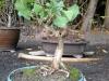 4blog-2010-10-04_20-38-12