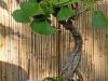4blog-2011-09-22_17-39-20