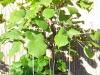 4blog-2012-09-15_17-49-37