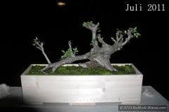 4blog-2011-07-04_22-10-47