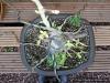 4blog-2012-04-13_16-58-55-jpg