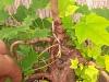 4blog-2012-08-07_19-07-19-jpg
