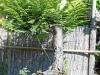 4blog-2014-06-01_17-18-39