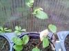 4blog-2012-09-04_19-29-16