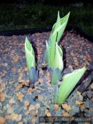 4blog-2012-04-19_18-22-40