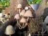 4blog-2012-08-12_19-06-10