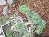 4blog-2011-05-03_18-51-00