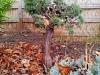 4blog-2012-11-25_16-16-36