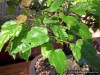 4blog-2012-05-28_18-11-23