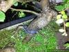 4blog-20120209_190511