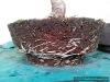 4blog-2012-04-13_13-53-22