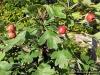 4blog-2012-09-14_17-57-49