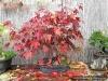 4blog-2012-10-28_15-57-46